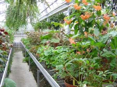 Les serres du Sénat au jardin du Luxembourg – AFABEGO
