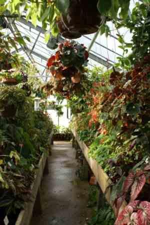 Le jardin botanique de Nancy – AFABEGO
