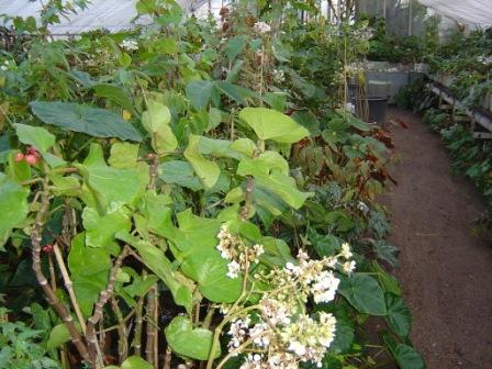 Le jardin botanique de lyon afabego for Jardin botanique lyon