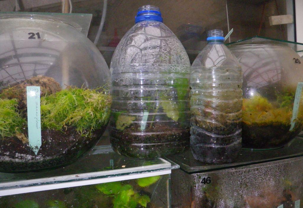 Cultiver des b gonias en terrarium afabego - Comment fabriquer un aquarium ...
