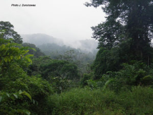 Cristal Mountains to Gabon