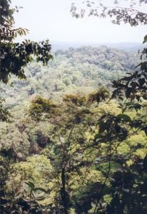 The rain forest to Gabon