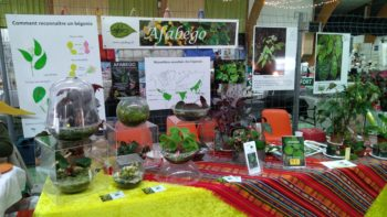 Permalink to: Horticultural events
