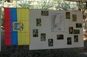 Un petit coup d'oeil aux bégonias de l'Equateur